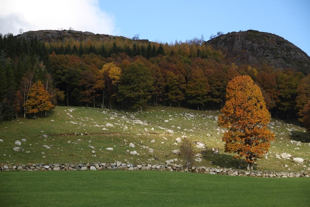 jesień trwa, rdzawych liści czas