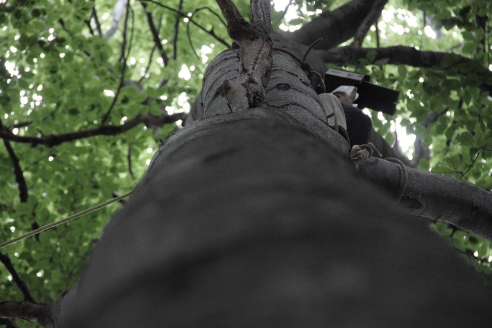 keszing na drzewie