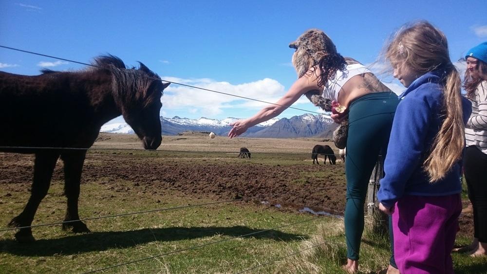 islandzka fauna ;)